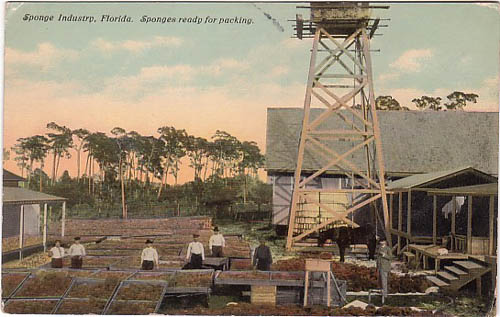 Florida - Sponge Industry ready for packing