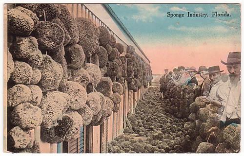 Florida - Sponge Industry