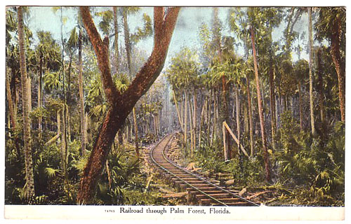 Railroad through Palm Forest